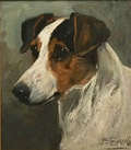 Jack Russell Terrier Head Study